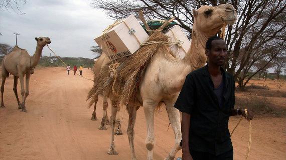 Kamel-Bibliothek auf dem Weg ins nächste Dorf. Bild: ZDF / © Herbert Ostwald