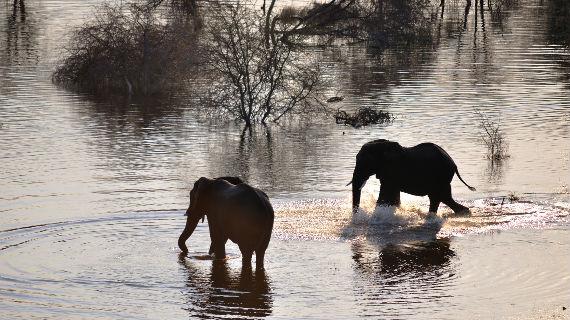 Elefanten im Wasser. Bild: ZDF / © Evie Pace