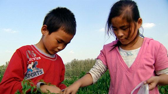 Jeden Tag gibt es irgendwo in China Festnahmen: Gewaltdelikte, Drogen, Raub. Die Täter kommen ins Gefängnis, sie werden häufig zu langjährigen Haftstrafen verurteilt, einige werden sogar hingerichtet. Was passiert mit ihren Kindern? Kinder beim Chilli pflücken. Bild: PHOENIX/Ariane Reimers