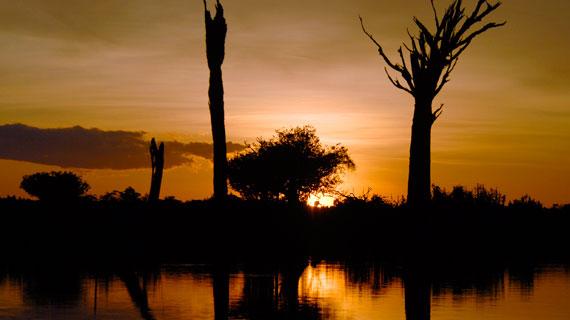 """Lange Zeit galt der Amazonas-Regenwald als """"Grüne Hölle"""" voller unbekannter Gefahren. Heute wissen wir, dass er eine Schatzkammer der Natur ist, die nicht nur enorm wichtig für das Weltklima ist, sondern auch zahllose Heilpflanzen birgt. Bild: NDR/NDR Naturfilm und Light & Shadow GmbH"""