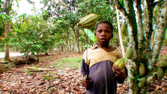 Ein Junge aus Burkina Faso arbeitet auf einer Kakaoplantage. Bild: NDR/Henrik Ipsen, U. Roberto Romano
