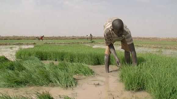 Arbeit auf den Reisfeldern. Bild: ARTE France