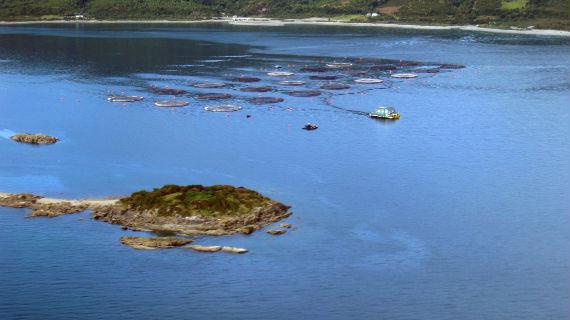 Massentierhaltung im Meer - 100 Millionen Lachse werden in Chile jährlich gemästet. Ein Riesengeschäft für den Großinvestor John Fredriksen - aber eine Katastrophe für die Umwelt. Bild: WDR/AnaConda Film International