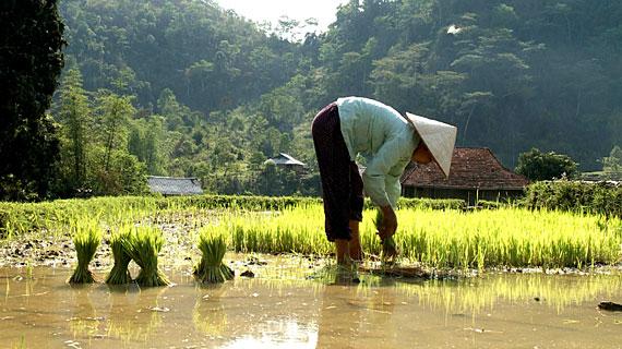 Die Hmong, wörtlich übersetzt Volk der Berge, leben in erster Linie von der Fischerei, vom Sammeln von Arzneipflanzen, vom Ackerbau auf künstlich angelegten Terrassen und von der Herstellung kunstvoller Pferdesättel. Bild: ARTE F / © System TV