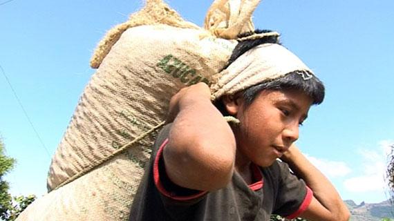 Bis zu 50 Kilo schwere Säcke schleppen Kinder in der Erntezeit auf den Kaffeeplantagen in Guatemala. Bild: WDR
