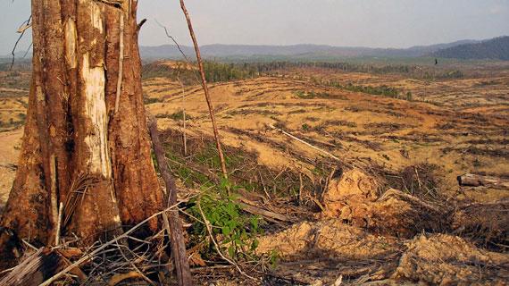 Auf Sumatra ebenso wie auf den übrigen Inseln des Indonesischen Archipels ist die Brandrodung eine gängige Praxis der Bauern. Bild: ARTE F / © Auteurs associés