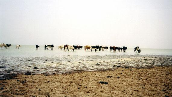 Niger - Eine Lebensader vertrocknet Bild: ARTE F / © Auteurs associés