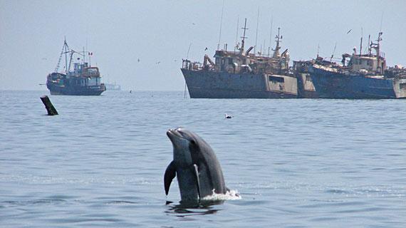 Obwohl die Delfine in Peru seit 1996 dank einer Initiative unter Schutz stehen, werden jedes Jahr bis zu 3.000 Tiere alleine für den Verzehr getötet und auf dem Schwarzmarkt verkauft. Bild: ARTE / © Medienkontor FFP