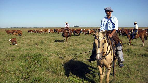 300 Pferde und 4000 Rinder gibt es auf der Estancia San Juan Poriahu. Bild: SWR/filmquadrat