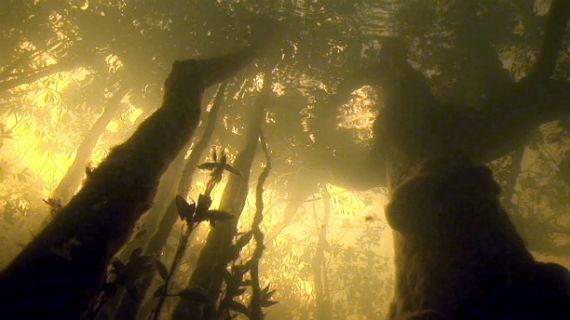 Nach der Schneeschmelze in den Anden stehen die Bäume am Amazonas wochenlang metertief im Wasser. Sie haben sich an die Ausnahmesituation angepasst. Sauerstoff nehmen sie über Poren in der Rinde oder Luftwurzeln auf. Bild: NDR/NDR Naturfilm und Light & Shadow GmbH