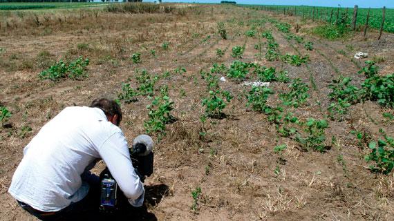 Das Monsanto-Herbizid Roundup vernichtet alles, außer den gentechnisch manipulierten Sojapflanzen. Bild: WDR/Wilfried Huismann