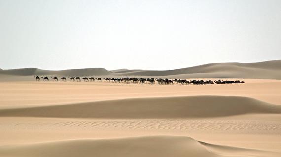 Salzkarawane auf dem Weg durch die Ténéré, die größte Trockenwüste der Erde. Bild: NDR/SWR/Filmquadrat/Ralph Wilhelm