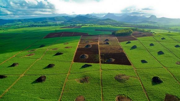 Zuckerrohrfelder aus der Luft. Bild: SWR / © SWR/Renaud Vandermeeren