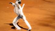 Anpassungsfähig: Der Larvensifaka bewegt sich auf dem Boden auf seinen Hinterbeinen fort, wobei er die Vorderbeine fürs Gleichgewicht in die Höhe hält. Bild: ARTE France / Jonathan Linus Fiely