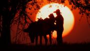 Erst kurz vor Sonnenuntergang ist Luis Serrano mit seinem Esel wieder zu Hause. Bild: NDR / © Marco Berger/doc.station